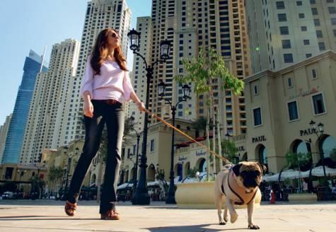 Pets in Dubai